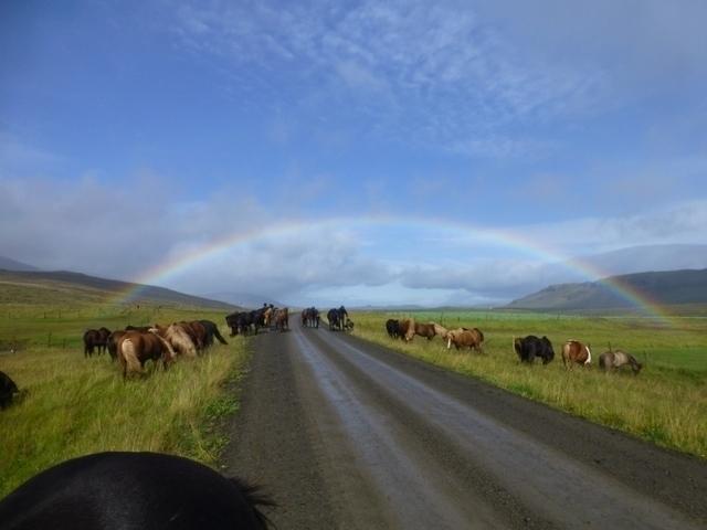 Aktivreisen: island sara