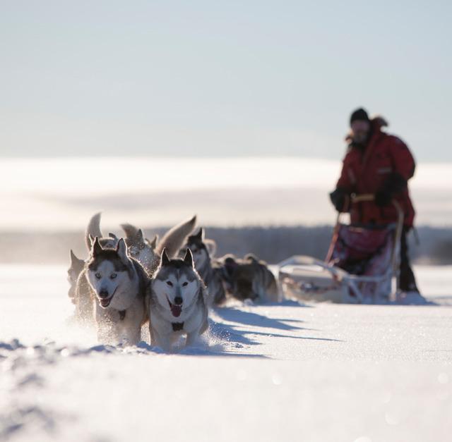 Winter: huskies c fredrik broman imagebank sweden se