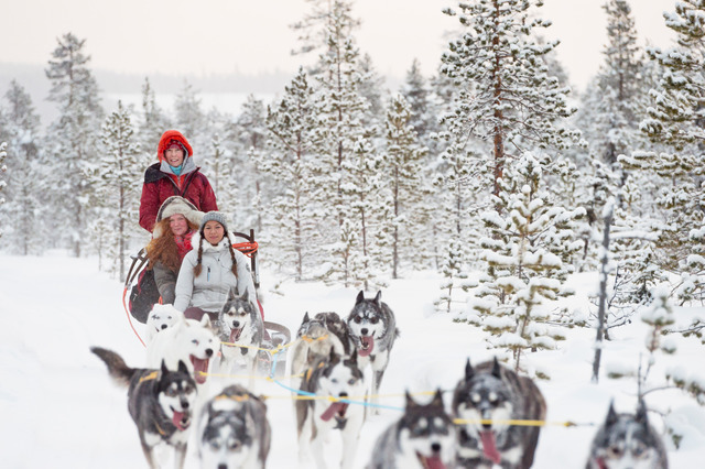 Winter: kiruna huskys anna oehlund imagebank