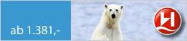 Hurtigruten Spitzbergen - ein arktisches Abenteuer