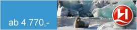 Hurtigruten   Spitzbergens Westküste - Im Reich der Eisbären 2020