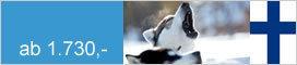 Winter Huskysafari durch die Wildnis Nordeuropas